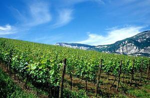 PAT | In arrivo 3 milioni di euro per il settore vitivinicolo ed enoturistico