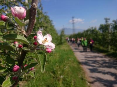 Colori, profumi e tradizioni della Val di Non a Quattro Ville in Fiore
